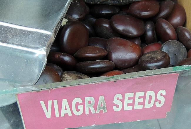 Viagra seeds