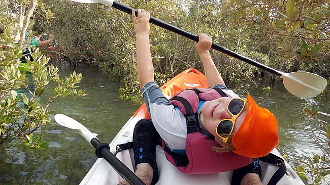Roos in Eastern Mangroves
